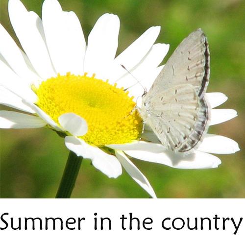 CDMS Summer Program